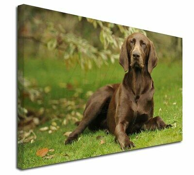 "German Pointer Dog 30""x20"" Wall Art Canvas, Extra Large Picture P, AD-GSP1-C3020"
