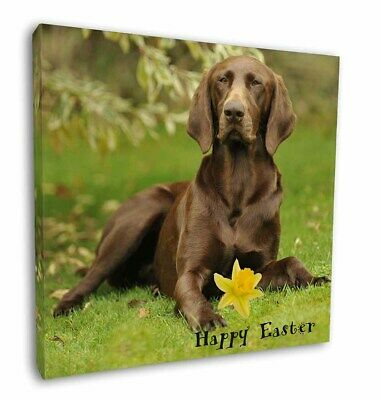 "'Happy Easter' German Pointer 12""x12"" Wall Art Canvas Decor, Pic, AD-GSP1DA1-C12"