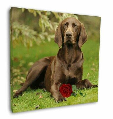 "German Shorthaired Pointer with Red Rose 12""x12"" Wall Art Canvas D, AD-GSP1R-C12"