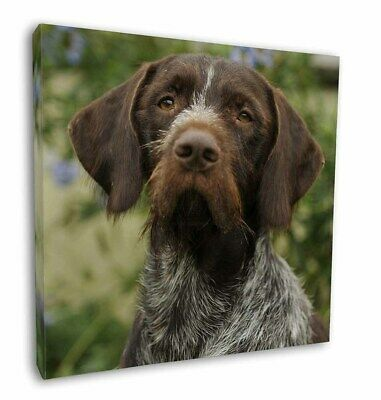 "German Wirehaired Pointer 12""x12"" Wall Art Canvas Decor, Picture Pr, AD-GWP1-C12"