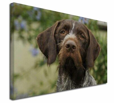 "German Wirehaired Pointer 30""x20"" Wall Art Canvas, Extra Large Pi, AD-GWP1-C3020"