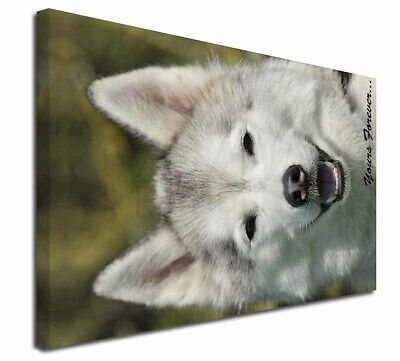 """Siberian Husky Dog 'Yours Forever' 30""""x20"""" Wall Art Canvas, Extra , AD-H1y-C3020"""