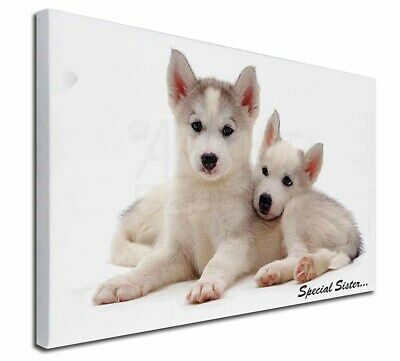 """Huskies 'Special Sister' Sentiment 30""""x20"""" Wall Art Canvas, Extra , AD-H70-C3020"""
