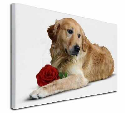 """Golden Retriever with Red Rose 30""""x20"""" Wall Art Canvas, Extra Lar, AD-L47R-C3020"""