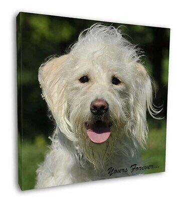 """White Labradoodle 'Yours Forever' 12""""x12"""" Wall Art Canvas Decor, Pi, AD-LD3y-C12"""