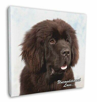 "Newfoundland Dog-With Love 12""x12"" Wall Art Canvas Decor, Picture P, AD-NF1u-C12"