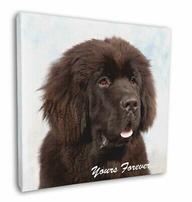 "Newfoundland Dog 'Yours Forever 12""x12"" Wall Art Canvas Decor, Pictu, AD-NF3-C12"