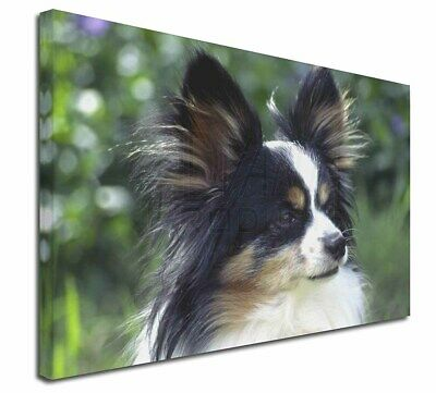 "Papillon Dog 30""x20"" Wall Art Canvas, Extra Large Picture Print D, AD-PA62-C3020"