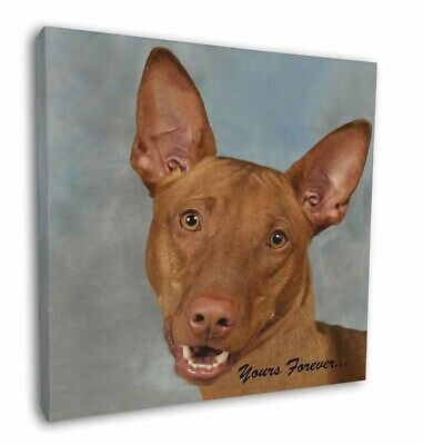 "Pharaoh Hound 'Yours Forever' 12""x12"" Wall Art Canvas Decor, Pictur, AD-PH1y-C12"
