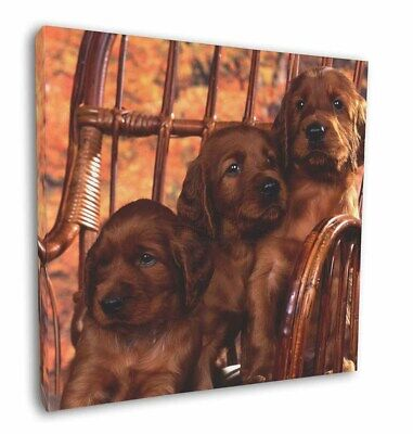 """Irish Red Setter Puppy Dogs 12""""x12"""" Wall Art Canvas Decor, Picture , AD-RS53-C12"""