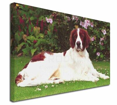 """English Setter Dog 30""""x20"""" Wall Art Canvas, Extra Large Picture P, AD-RWS1-C3020"""