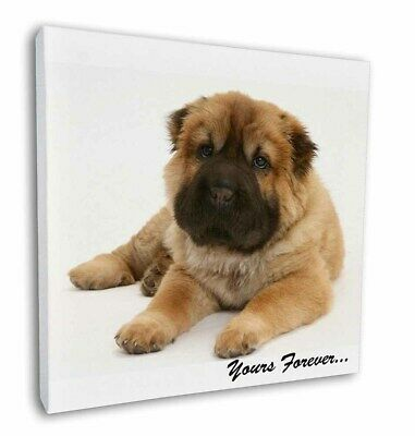 "Shar-Pei Puppy 'Yours Forever' 12""x12"" Wall Art Canvas Decor, Pictur, AD-SH3-C12"