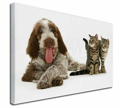 """Italian Spinone Dog and Kittens 30""""x20"""" Wall Art Canvas, Extra Lar, AD-SP1-C3020"""