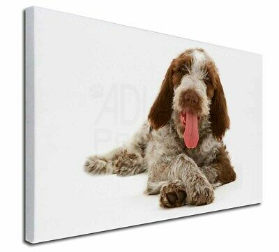 """Italian Spinone Dog 30""""x20"""" Wall Art Canvas, Extra Large Picture P, AD-SP2-C3020"""