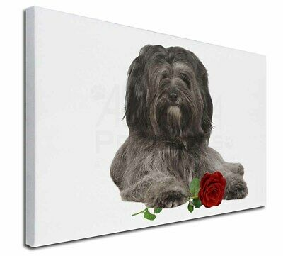 """Tibetan Terrier with Red Rose 30""""x20"""" Wall Art Canvas, Extra Larg, AD-TT2R-C3020"""