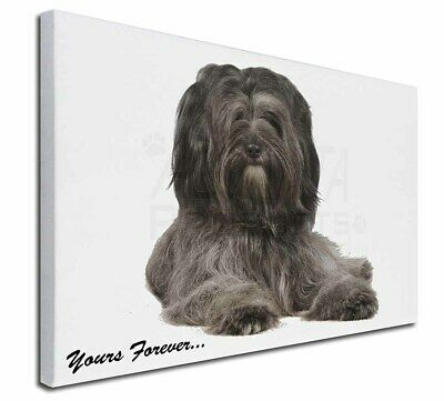 """Tibetan Terrier 'Yours Forever'  30""""x20"""" Wall Art Canvas, Extra L, AD-TT2y-C3020"""