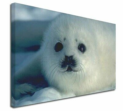 """Snow White Sea Lion 30""""x20"""" Wall Art Canvas, Extra Large Picture P, AF-S13-C3020"""