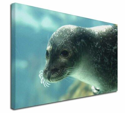 """Sea Lion 30""""x20"""" Wall Art Canvas, Extra Large Picture Print Decor, AF-S1-C3020"""