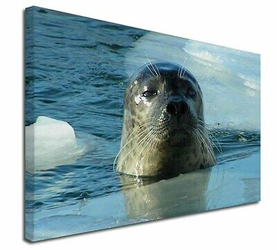"""Sea Lion in Ice Water 30""""x20"""" Wall Art Canvas, Extra Large Picture , AF-S2-C3020"""