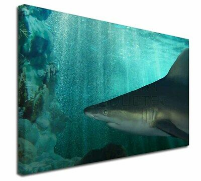 "Shark Photo 30""x20"" Wall Art Canvas, Extra Large Picture Print De, AF-SHA1-C3020"