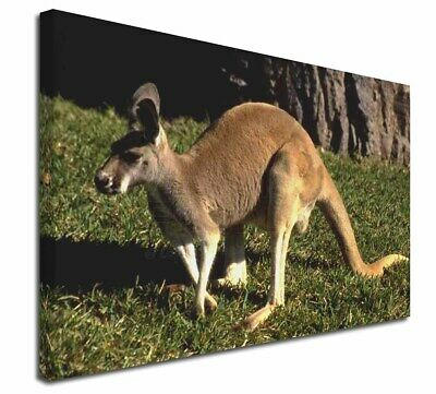 "Kangaroo 30""x20"" Wall Art Canvas, Extra Large Picture Print Decor, AK-2-C3020"