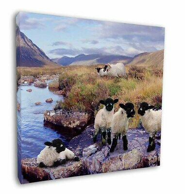 "Border Collie on Sheep Watch 12""x12"" Wall Art Canvas Decor, Picture P, AS-24-C12"