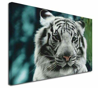 """Siberian White Tiger 30""""x20"""" Wall Art Canvas, Extra Large Picture P, AT-13-C3020"""