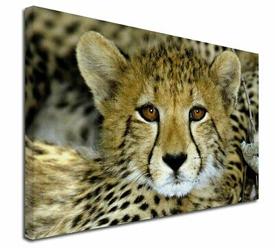 """Baby Cheetah 30""""x20"""" Wall Art Canvas, Extra Large Picture Print Dec, AT-18-C3020"""