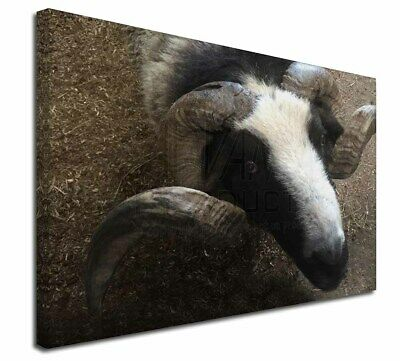 """New Goat Face 30""""x20"""" Wall Art Canvas, Extra Large Picture Print D, GOAT-3-C3020"""