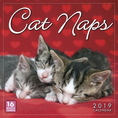 Cat Naps Official 2019 Wall Calendar New & Sealed