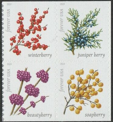 US 5415-5418 5418a Winter Berries forever block set (4 stamps) MNH 2019