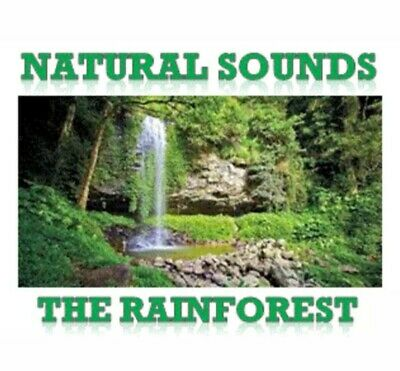 NATURAL SOUNDS MUSIC Of The Rainforest Cd, Relaxation, Nature