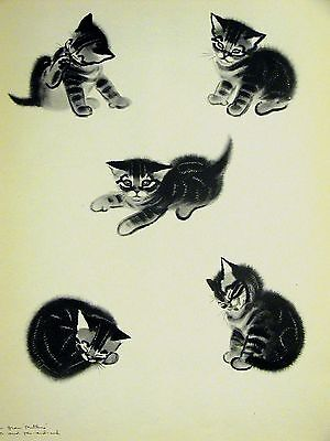 Clare Turlay Newberry 5 CUTE KITTEN POSES c1940 Large Art Print Matted