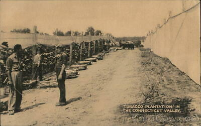Tobacco Plantation in the Connecticut Valley Linen Postcard The Collotype Co.