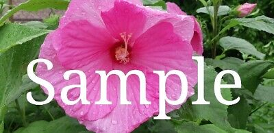 Digital Photo Image Wallpaper Own Picture Flower