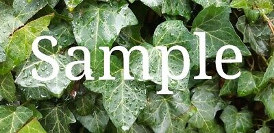 Digital Photo Image Wallpaper Own Picture Amber Leaf