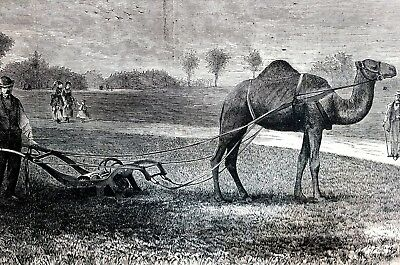 Central Park NYC 1869 MOWING GRASS w CAMEL Harpers Weekly Victorian Engraving
