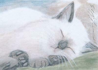 ACEO original pastel drawing siamese kitten catnap cat by Anna Hoff