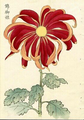 1893 Hasegawa Original Meiji Japanese Woodblock Antique Top Red Chrysanthemum