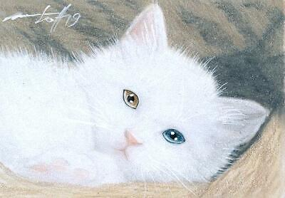 ACEO original pastel drawing odd eyed white kitten  cat by Anna Hoff