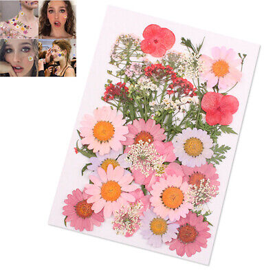 Pressed Flower Organic Natural Dried Flowers DIY Art Crafts Scrapbooking Decor