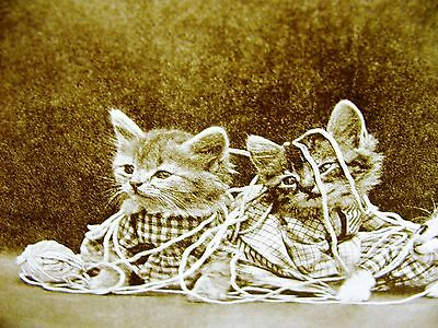 Harry Whittier Frees 1915 FOUR KITTENS TANGLED UP in a CLOTHES LINE Print Matted