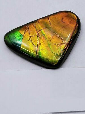 "Ammolite ""Canada's Opal"" Natural Free Form Tricolored Orange/Gold/Green Gemstone"