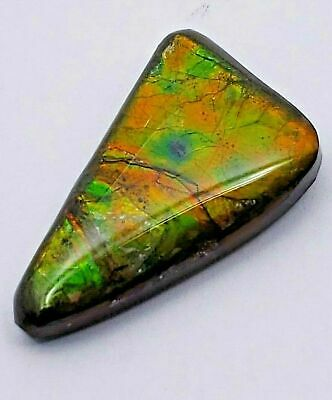 "Ammolite ""Canada's Opal"" Natural Free Form Triangular Green Gold Red Pattern"