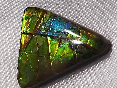 "Ammolite ""Canada's Opal"" Free Form Triangular Gold Stained Glass Gemstone"