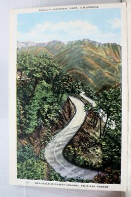 California CA Sequoia National Park Generals Highway Giant Forest Postcard Old
