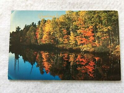 The North Woods in Autumn, Greetings from Pembine, Wisconsin  Vintage Postcard