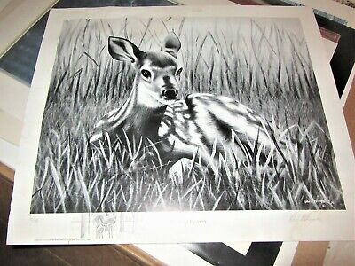 Young fawn  deer art poster robert metropulos signed & numbered 10 / 480