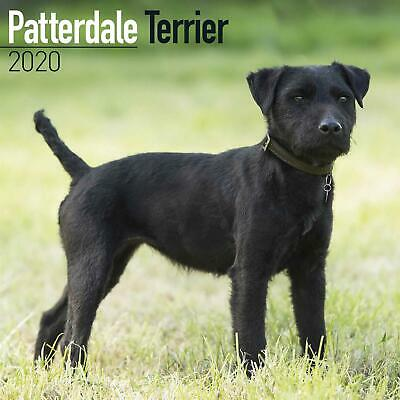 Patterdale Terriers 2020 Official Square Wall Calendar
