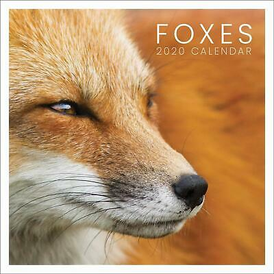 Foxes 2020 Official Square Wall Calendar